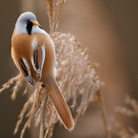 Le beau / Beauty of the reed bed